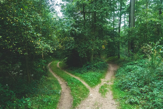 What is the Supplemental Trademark Register? Think of the two registers as separate paths in a forest. Each leads to the same point.